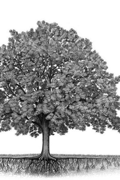 arbre-theatre-du-chene-noir